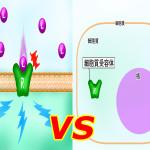 細胞膜受容体と核内受容体の違いは?理解が深まる!そういうことか!