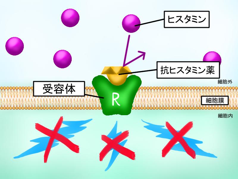 +受容体と抗ヒスタミン薬 抗~薬